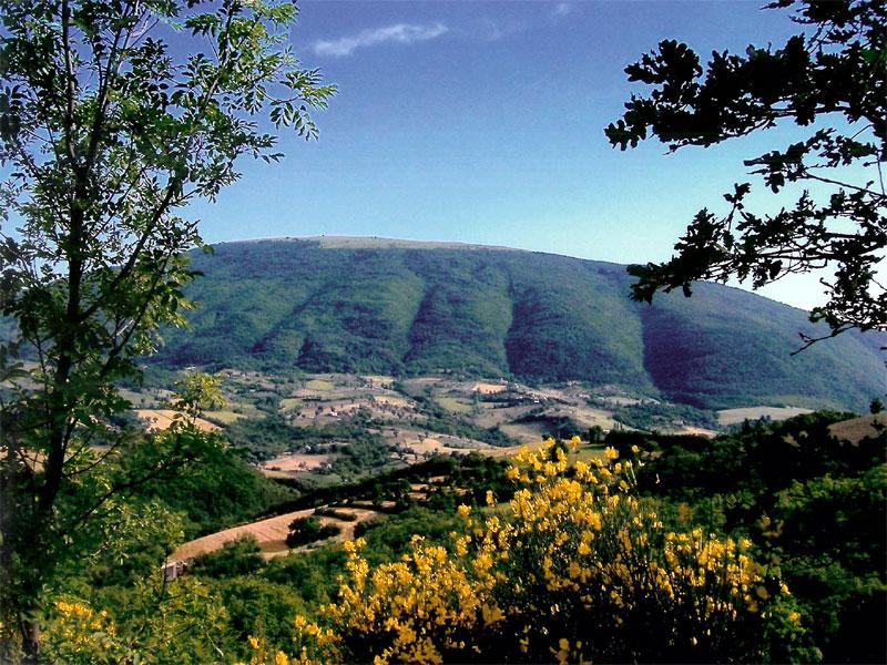 MONTE SUBASIO: paradiso delle erbe spontanee
